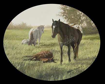 In the Field of Dreams - Appaloosa pasture scene