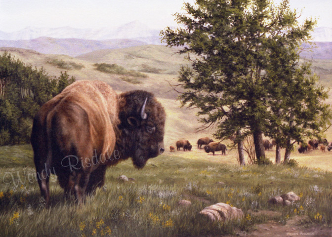 Monarch of the Highwood - Oil on canvas - Plains Bison